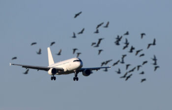 Bird strikes are a common problem in the aviation industry.