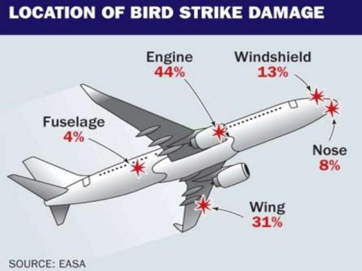 A bird strike inspection is crucial to assess the overall status of the aircraft.